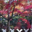 京都・永観堂 〜 池に映る紅葉 🍁