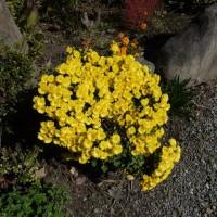 市役所の玄関先に蘭の花!