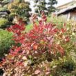 今週の生け花庭の紅葉