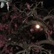 満月の前夜