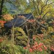 ♪‥崇禅寺の晩秋の景色。と里芋の煮物。