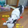 2018 3/18★今日はターボ君・パール君・まるちゃんです★