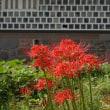 金沢城公園の植物ーー(花と実)