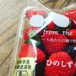オーガニック苺