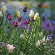 望遠レンズで花壇の花を撮る