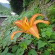 北設楽郡で咲いていた花たち(8月21日)