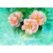 絵画販売・水彩・原画「牡丹の花」