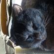 黒猫ぬくぬく。