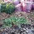 落ち葉堆肥を