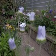 2017.05.20 アークトチス グランディスの花