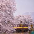 桜と三岐貨物