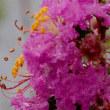 雨上がりの公園に咲く花