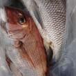 今日のカブラ釣り