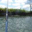 思惑通りには行かない鮎釣り・・in鬼怒川