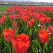 北陸ツアー:朝日舟川「春の四重奏」