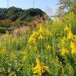 下賀茂 道の駅 湯の花