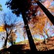 四百年ぶりに蘇った戦国時代の山城「城跡公園・足助城」