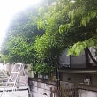 目隠し庭木