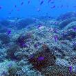 べた凪の海! 沖縄ダイビング 那覇シーマリン