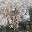 🌸古刹の桜🌸