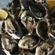 生牡蠣を使っての献立
