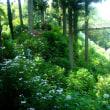 大雄寺で茶筅供養を見ました