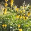 シャンソン歌手リリ・レイLILI LEY  JARDIN DES PLANTS植物園の花達