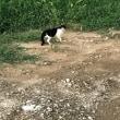 ネコ、ねこ…の日。