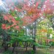 昭和記念公園の紅葉(2018 その2)