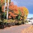深まる秋/昨日の散歩から