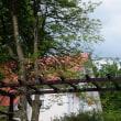 高原は薔薇の季節4