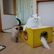 コストコの箱