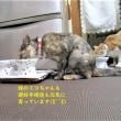 2018夏の甲子園山口大会「下関国際エール交換」&トラちゃん大きくなったね(#^^#)