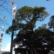 鎌倉御霊神社の例大祭