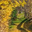 黄色に染まった田舎道 (Photo No.14109)
