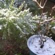 またまた「♪雪でした~~」