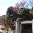 弥生三月、花見頃。街に梅の香が溢れ、桜の花を心待ちする雛祭り…