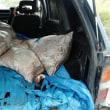 サハリン国境警備局が2つのサケマス密漁グループを摘発