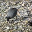 鴨川で見た鳥たち