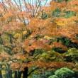 ひのきの森の紅葉