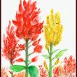 今年も赤黄オレンジとケイトウが咲いて~
