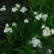 雨の中の植物群