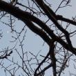 桜(はな)の季節