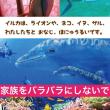 【参加者募集中】Japan Dolphins Day 2018@名古屋 (要★参加連絡)