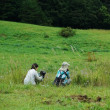 マツムシソウ咲く草原を眺める