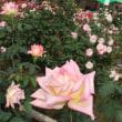 秋バラin神代寺植物園