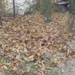 1週間でこんなに溜まった枯れ葉
