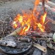 今年初めての焚き火で焼き芋だ