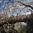 昨日に続き今日の桜は高遠で信州の桜に二日酔う。