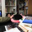 黒猫ジジィ これぞ看板ネコの仕事